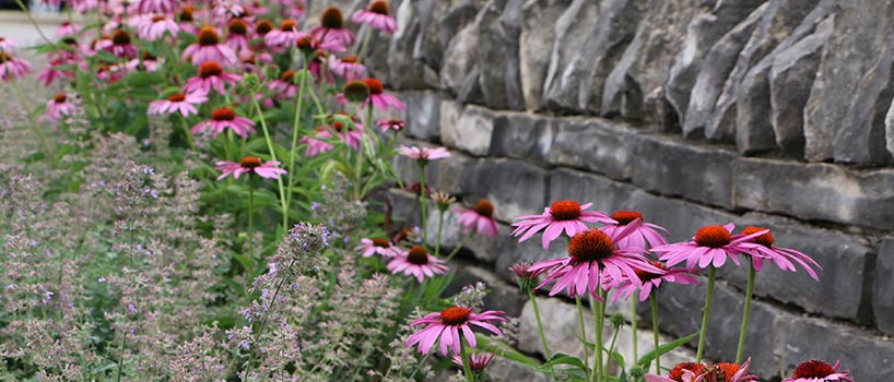 flowers near stone wall